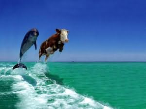 к чему снится стадо коров мужчине