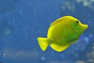 к чему снится живая рыба женщине