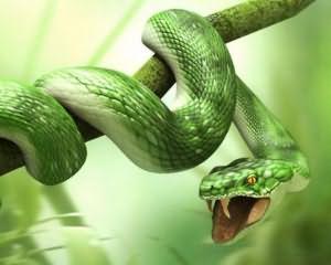 к чему снится змея мужчине