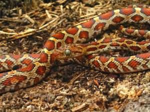 к чему снится змеи много мужчине