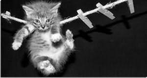 Убить кота во сне