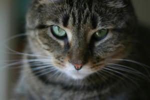 Убить во сне кота