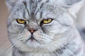 Видеть во сне как убивают кота