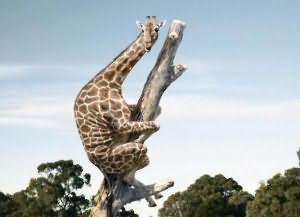 сонник жираф во сне