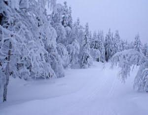 Сонник сугробы белого снега