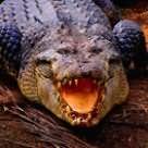 крокодил сонник фрейда