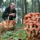 когда собираешь грибы