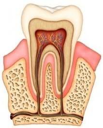 Приснился выпавший зуб без крови