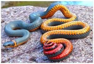 снилась змея