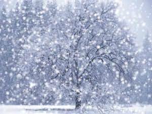 снилось мне неожиданно выпал снег