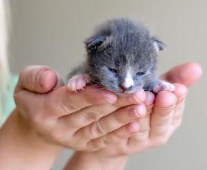 сонник котенок на руках