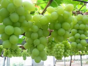 к чему снится виноград зеленый