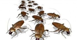 видеть во сне много тараканов