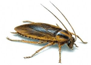видеть во сне таракана