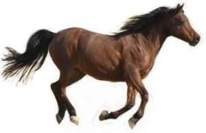 К чему снится лошадь или конь