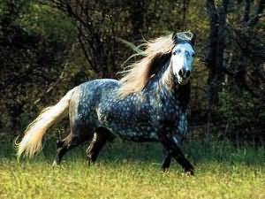 К чему снятся лошади девушке