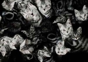 Много кошек во сне