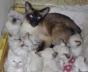 Сон много кошек и котят