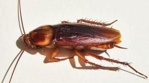 что означают тараканы во сне