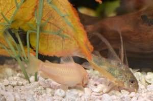 рыбы в аквариуме сонник