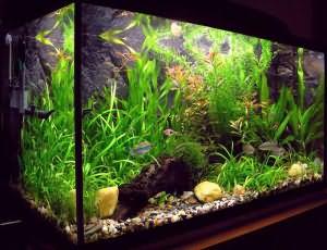 сон рыбы в аквариуме