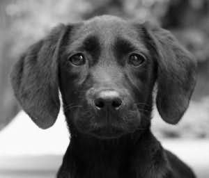 видеть во сне черную собаку