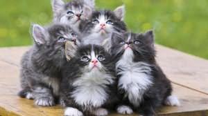 сон много маленьких котят