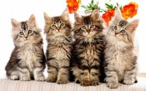 к чему снятся котята много