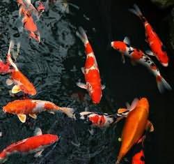к чему снится ловить рыбу руками