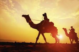 сонник верблюд белый