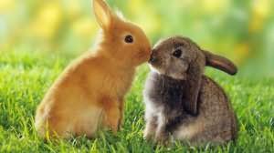 к чему снится убитый заяц