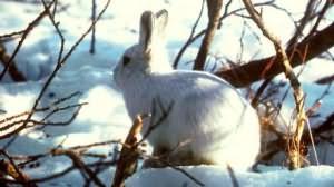 к чему снятся зайцы и кролики