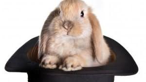 к чему снится заяц серый