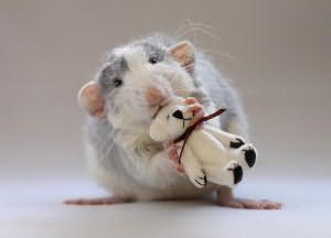 убить во сне крысу что это значит