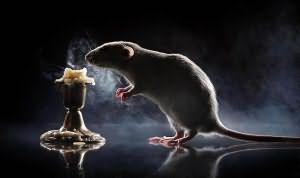видеть во сне убить крысу