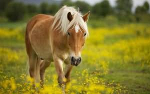 к чему снится верблюд во сне