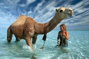 к чему снится верблюд бежит за мной