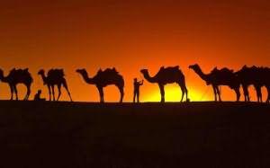 к чему снятся верблюды в пустыне