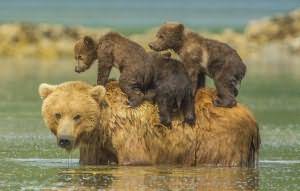 убегать от медведей во сне
