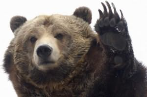 убитый медведь во сне