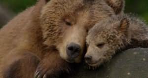 приснилось убегать от медведя