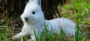пугливый белый кролик во сне