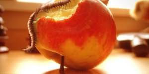 черви на пищевых продуктах