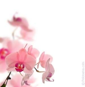 Цветы комнатные по соннику