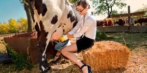к чему снится доить корову
