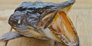 сонник голова рыбы