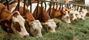кормить животных во сне