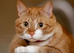 Сонник Кошка которая Кусает за руку во сне к чему снится