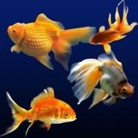 к чему снится ловить руками живую рыбу