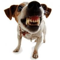 сонник злые собаки нападают
